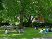 Green Garden Lunchtimes
