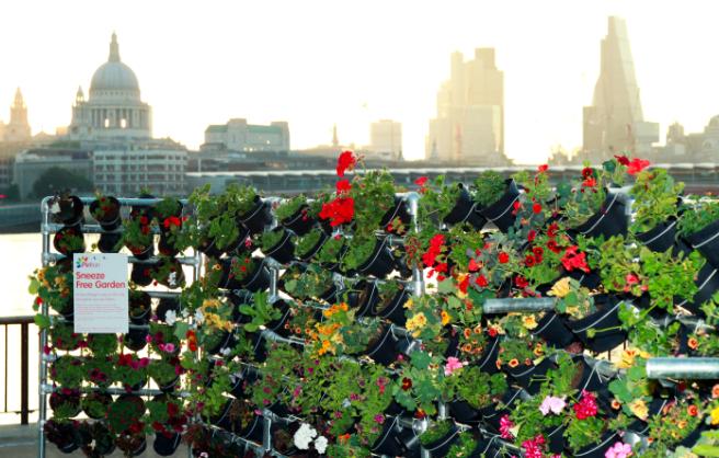 Sneeze Free Garden London