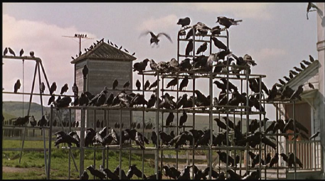 28 October: Sci/Film Halloween Special: Animal Intelligence - The Birds (Alfred Hitchcock, USA, 1963, 119min)