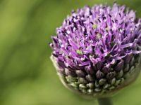 Best Suitable Environment for Flower Bulbs